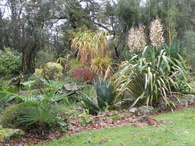 R ussir l 39 acclimatation de vos plantes exotiques jardin for Les plantes et le gel